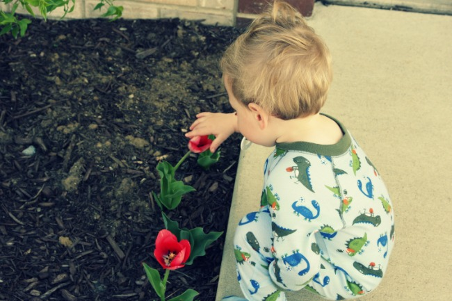 spencer picking tulips